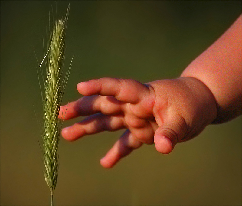 "photo ""the child's hand I love..."" tags: genre,"
