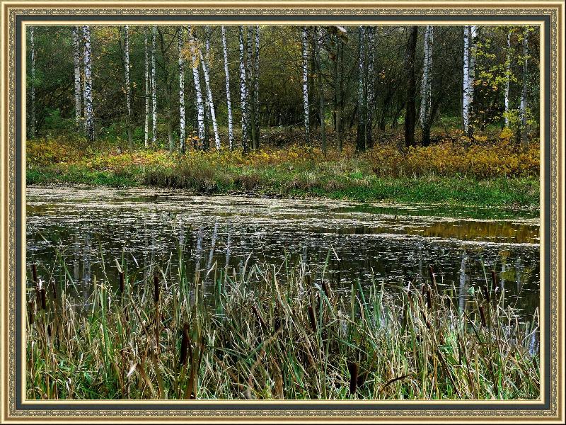 """photo """"Walk on autumn."""" tags: landscape, autumn"""