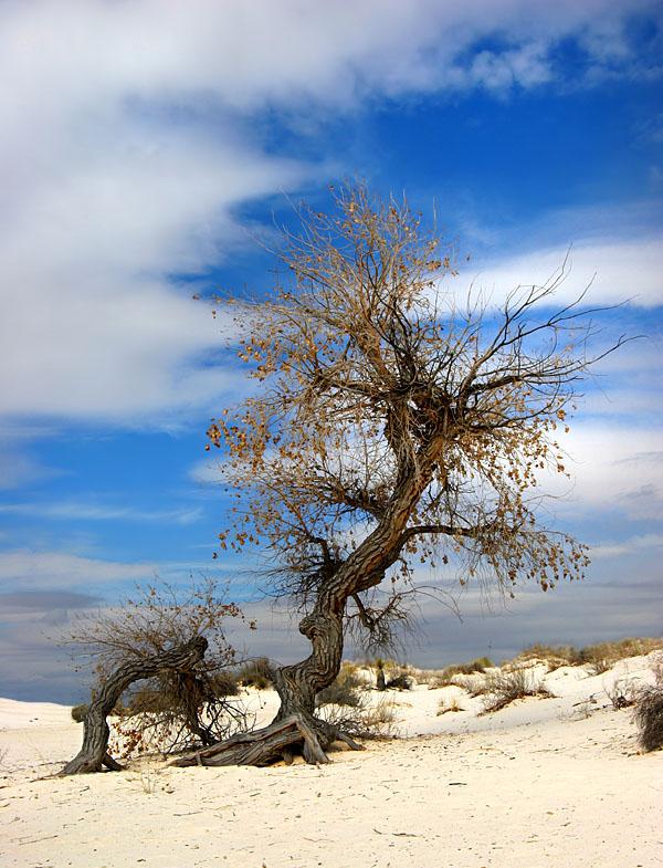 "photo ""Desert's Son"" tags: landscape, travel,"