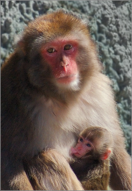"""фото """"Семейный портрет"""" метки: природа, дикие животные"""
