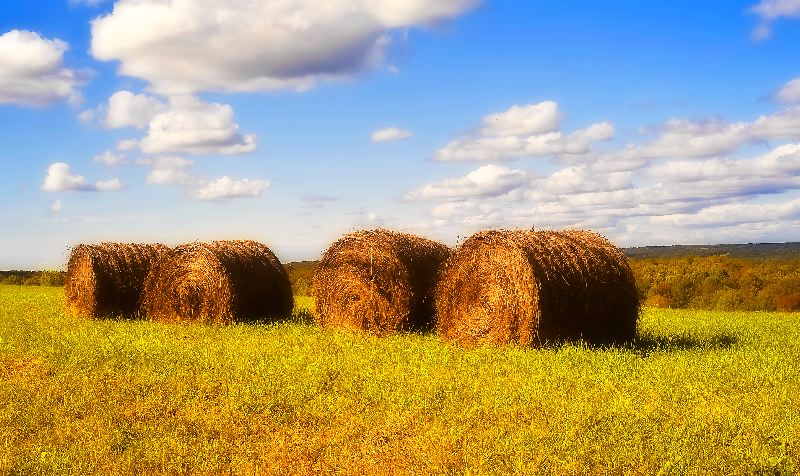 "photo ""Rolls of Hay"" tags: landscape, autumn"