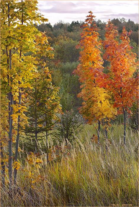 "photo ""The autumn attire"" tags: landscape,"