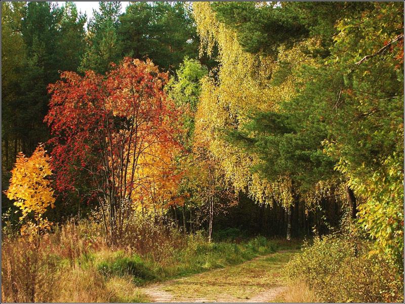 """photo """"Easy Autumn Palette"""" tags: landscape, autumn, forest"""