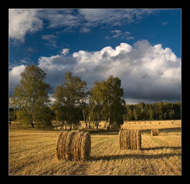 "фото ""поле"" метки: пейзаж, лето"