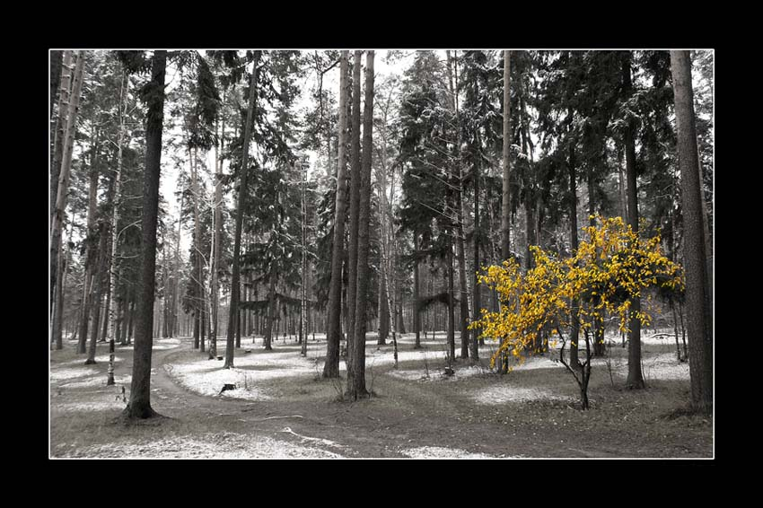 "photo ""The First snow..."" tags: landscape, autumn, forest"