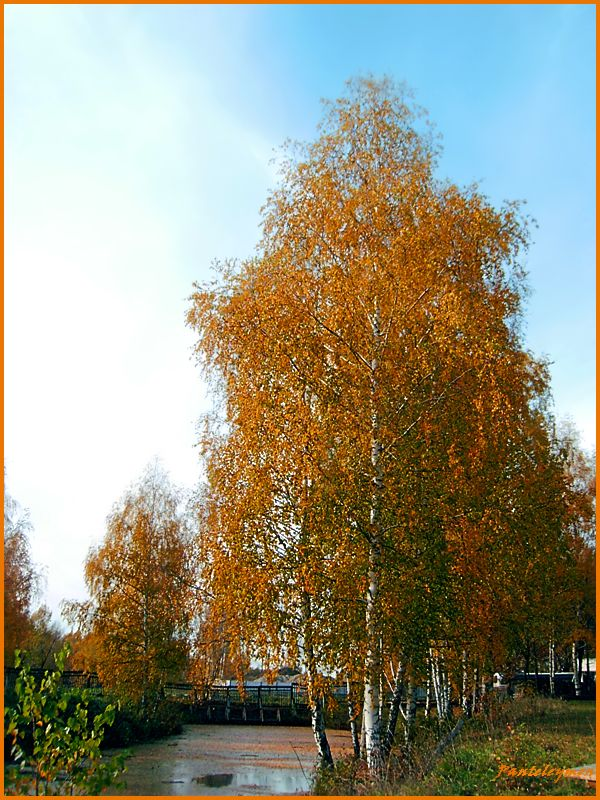 """фото """"осенью"""" метки: пейзаж, осень"""
