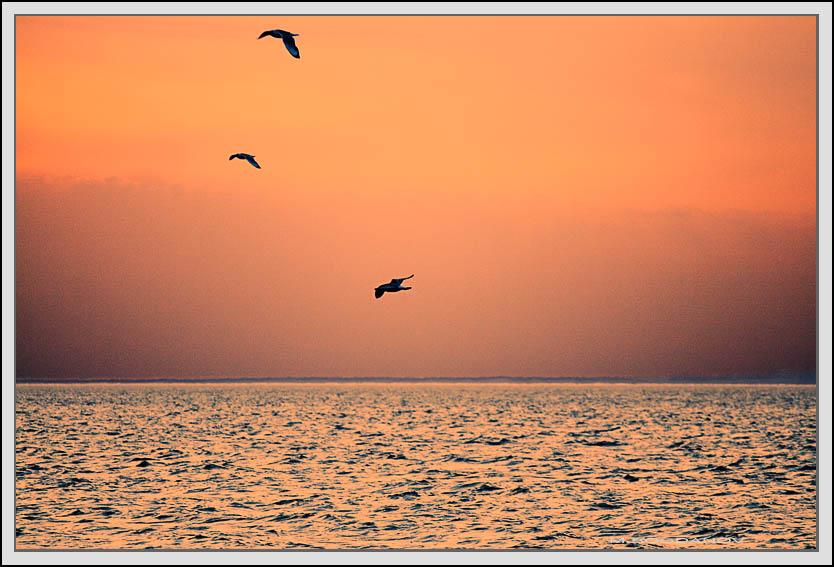 "photo ""Evening"" tags: landscape,"