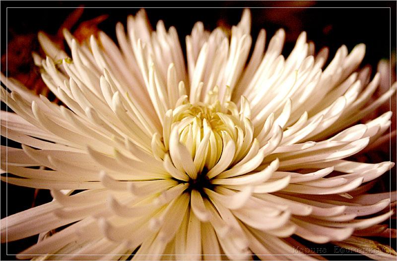 "фото ""принцесса осени"" метки: природа, цветы"