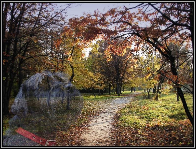 "photo ""***"" tags: landscape, montage, autumn"