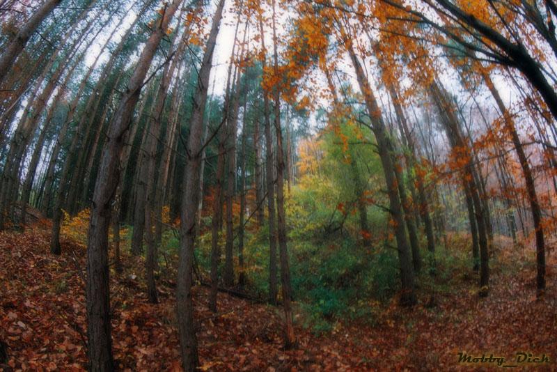 "photo ""Autumn Invasion"" tags: landscape, mountains, spring"