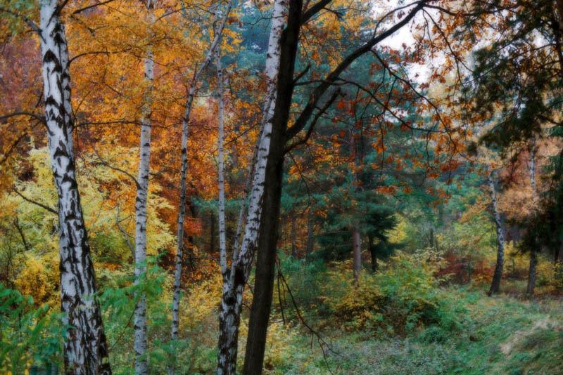 """фото """"Палитра осени"""" метки: пейзаж, осень"""
