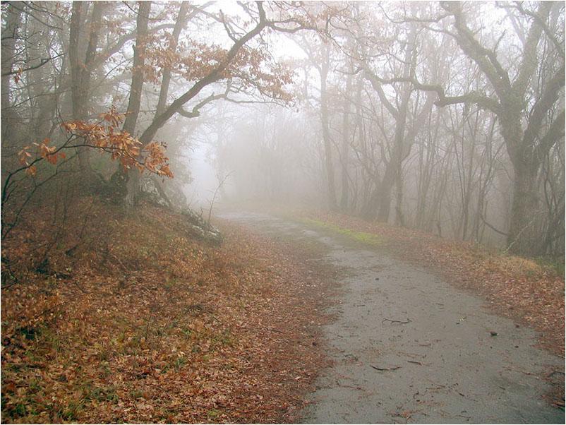 """фото """"Весенний туман"""" метки: пейзаж, весна, лес"""