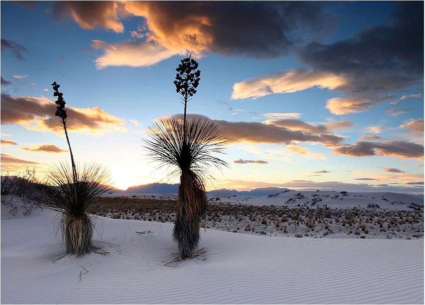 "photo ""Sunset with two yukkas in White Sands"" tags: landscape, travel, sunset"