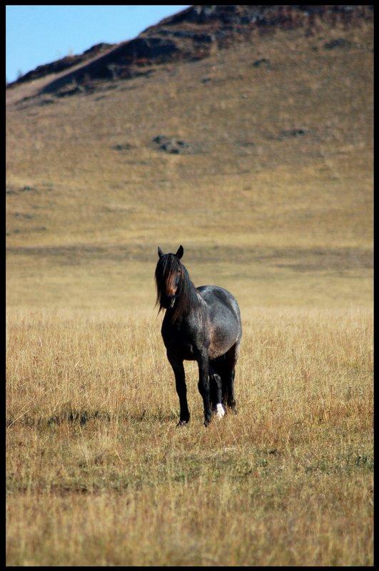 """photo """"***"""" tags: nature, landscape, mountains, pets/farm animals"""