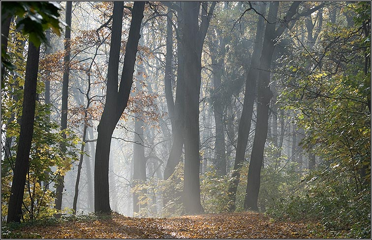 "photo ""In the Autumn Forest"" tags: landscape, autumn"