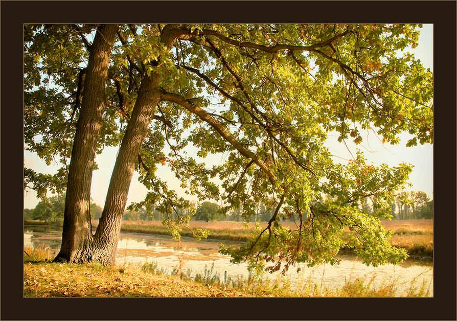 """фото """"Осенний этюд"""" метки: пейзаж, осень"""