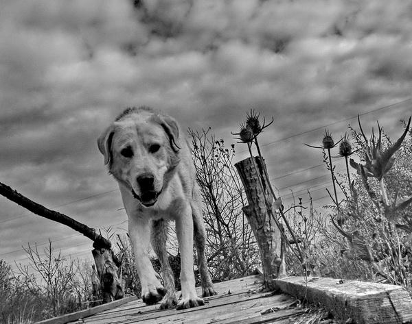 "photo ""Crossing the bridge"" tags: nature, pets/farm animals"