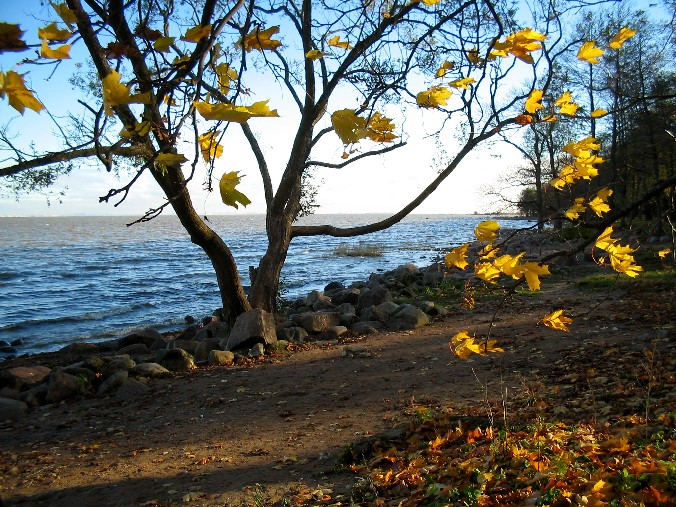 "photo ""The Leaves in the Wind"" tags: landscape, autumn"