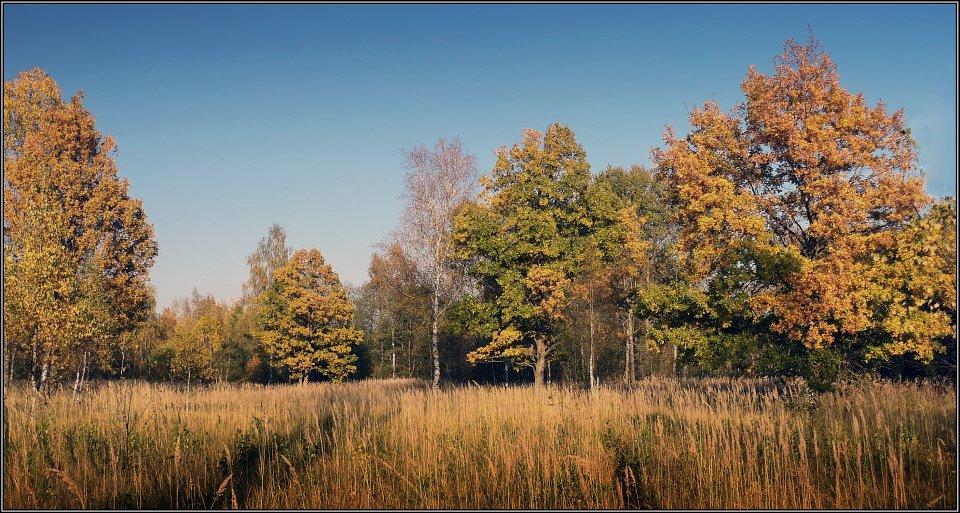 "фото ""Осенние дубки"" метки: пейзаж, осень"