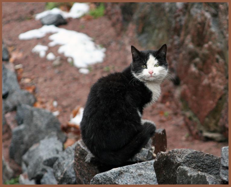 """фото """"выборгская"""" метки: природа, домашние животные"""