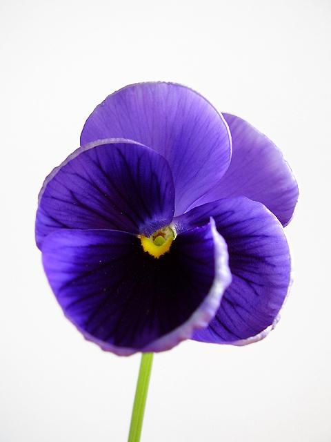 "фото ""*"" метки: природа, натюрморт, цветы"