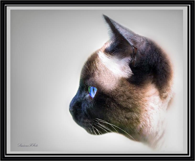 """фото """"стиль сиам"""" метки: природа, домашние животные"""