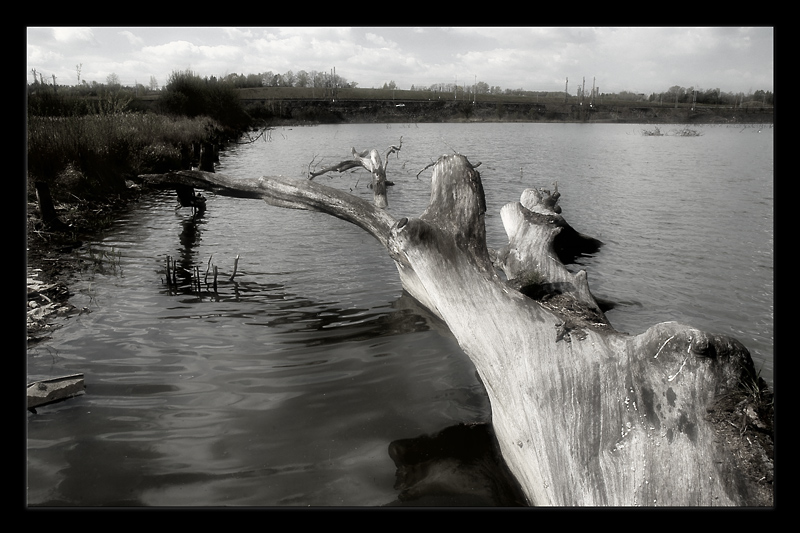 "photo ""...humanity: revealed..."" tags: landscape, black&white, water"