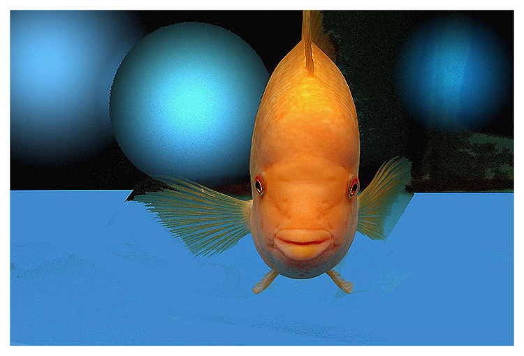 "photo ""aquafish 1"" tags: underwater,"