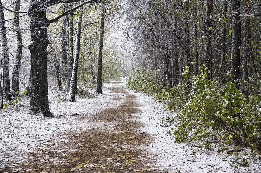 """photo """"Sleet snow"""" tags: landscape, autumn, winter"""
