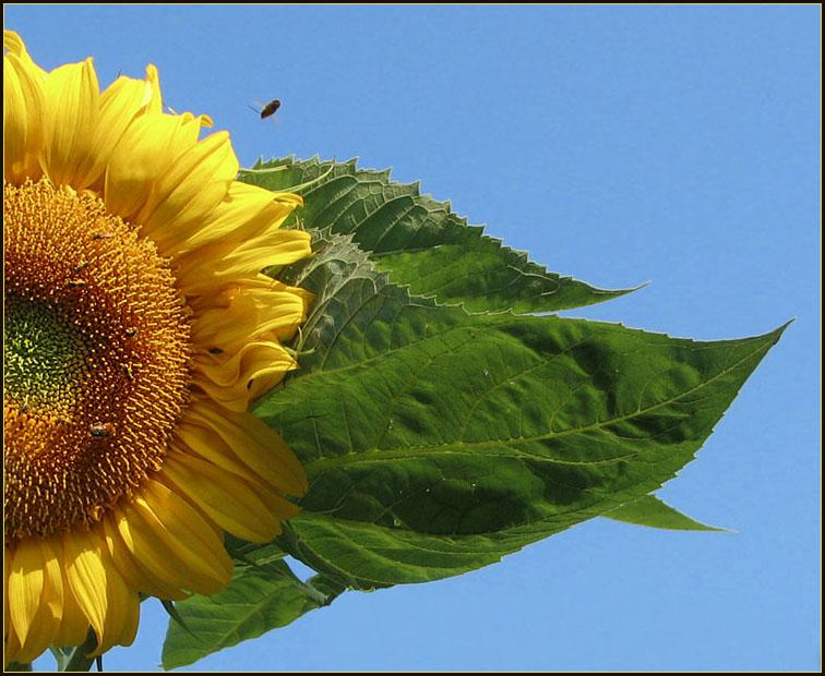 "фото ""Sunny day"" метки: природа, цветы"