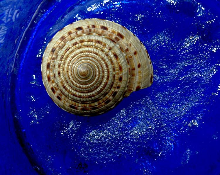 """photo """"Sea Shell"""" tags: macro and close-up,"""