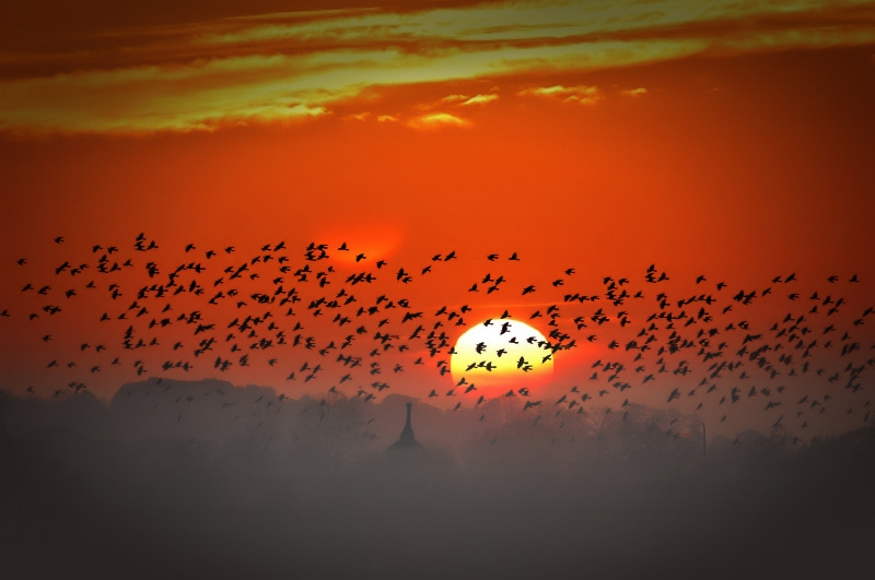 "photo ""Feast for crows"" tags: landscape, sunset"