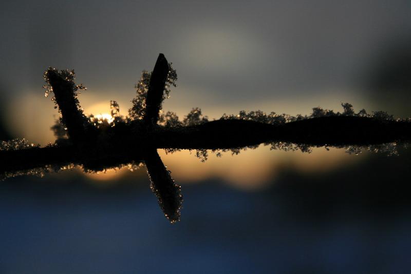 "фото ""Колючка"" метки: пейзаж, жанр,"