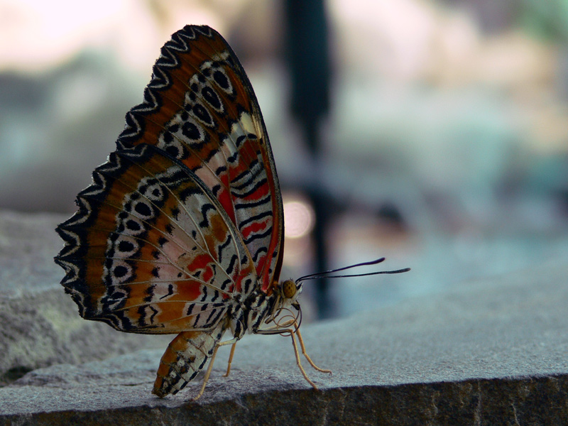 """photo """"***"""" tags: nature, macro and close-up, insect"""