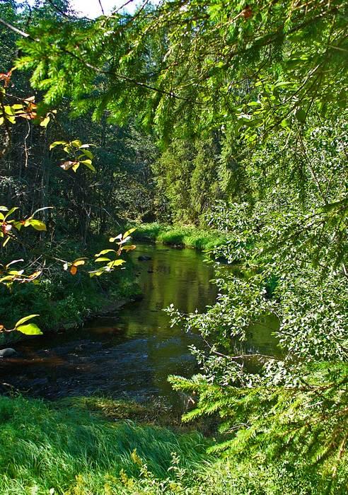 "фото ""Тишина"" метки: пейзаж, вода, лес"