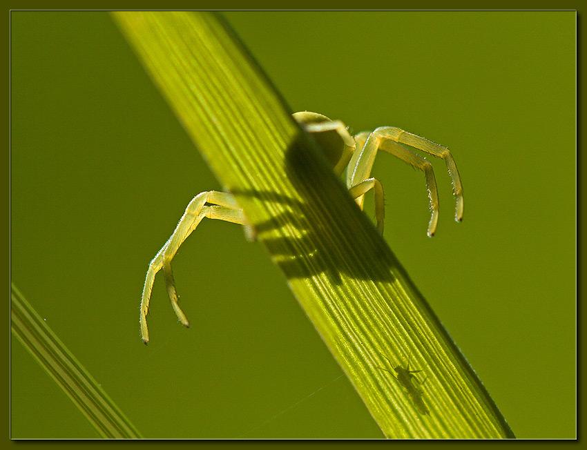 """фото """"Gotcha!"""" метки: макро и крупный план, природа, насекомое"""