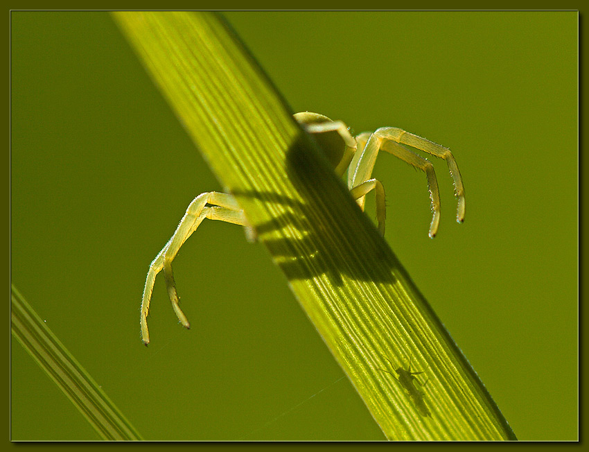 "photo ""Gotcha!"" tags: macro and close-up, nature, insect"