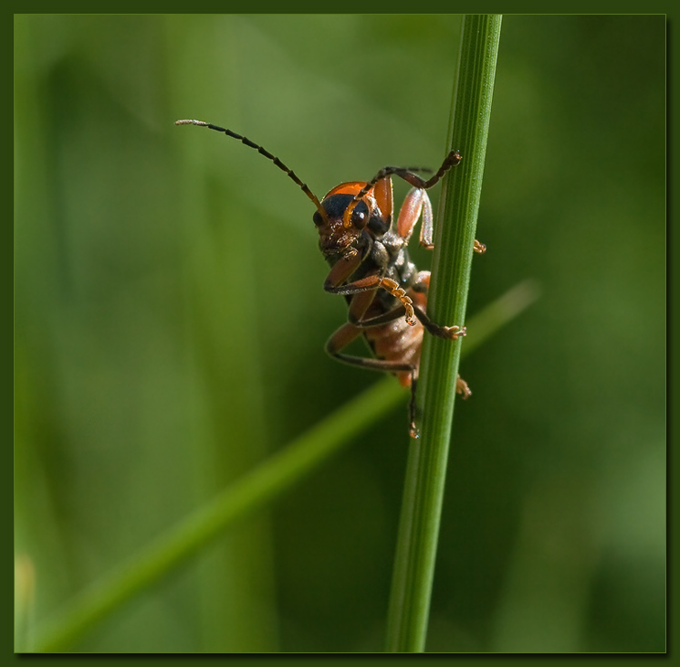 "photo ""Encounter"" tags: macro and close-up, nature, insect"