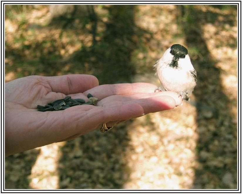 """фото """"Я маленькая птичка я вовсе не медведь"""" метки: юмор, природа,"""