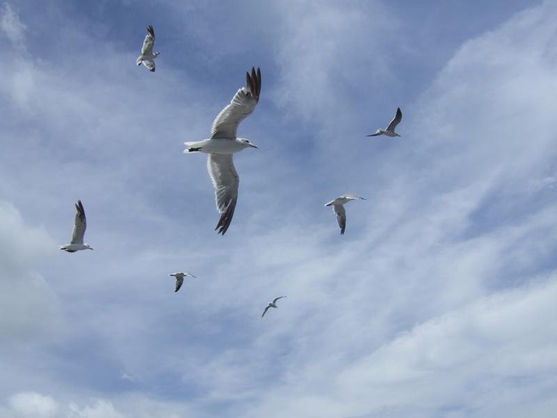 "photo ""Чайки"" tags: nature, travel, North America, wild animals"