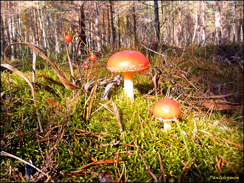 "фото ""в осеннем лесу"" метки: пейзаж, лес"