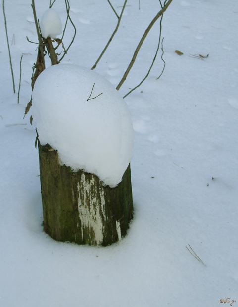 "photo ""Winter attire"" tags: landscape, forest, winter"