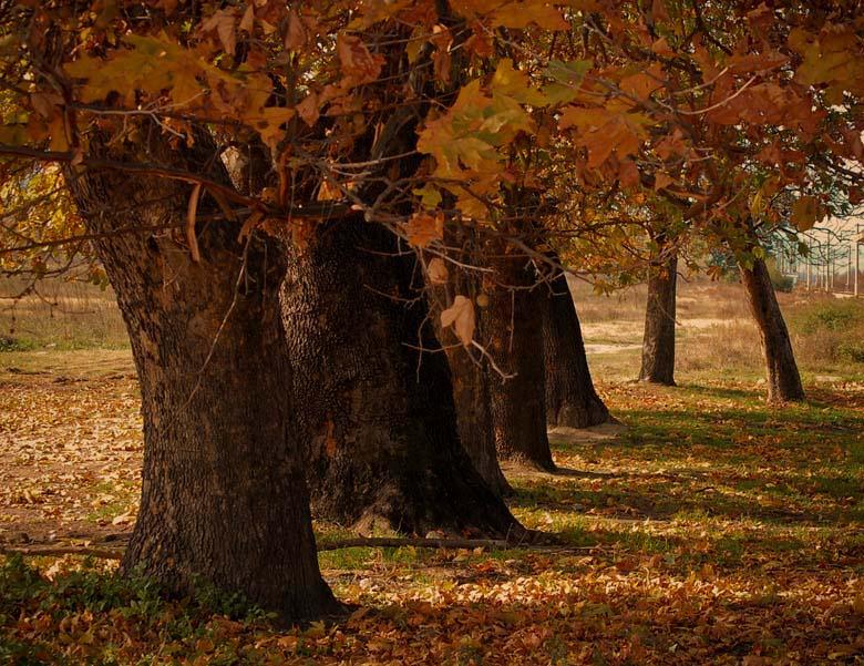"""photo """"*"""" tags: landscape, autumn"""