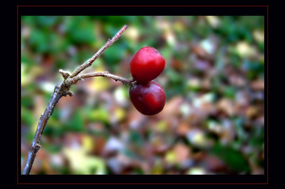 """фото """"Herbst"""" метки: пейзаж, лес"""
