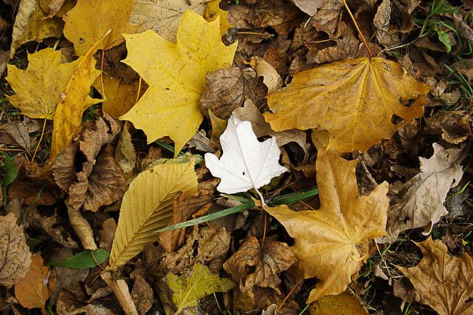 """photo """"***"""" tags: landscape, fragment, autumn"""