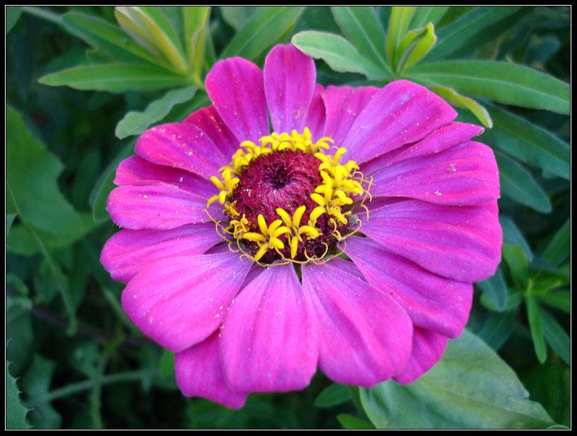 "photo ""dahlia"" tags: nature, flowers"