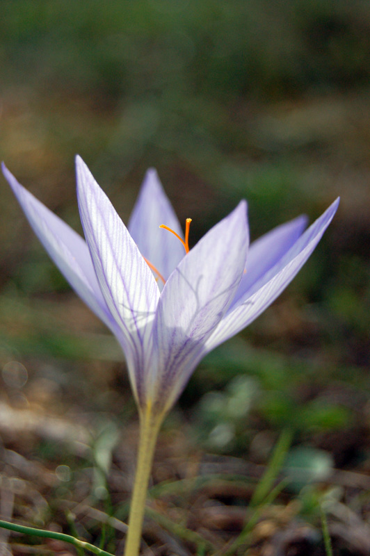 "photo ""***"" tags: nature, flowers"