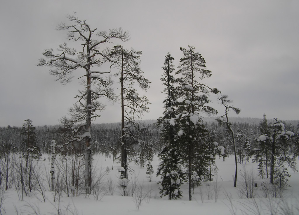 "photo ""The gray winter day"" tags: landscape, forest, winter"