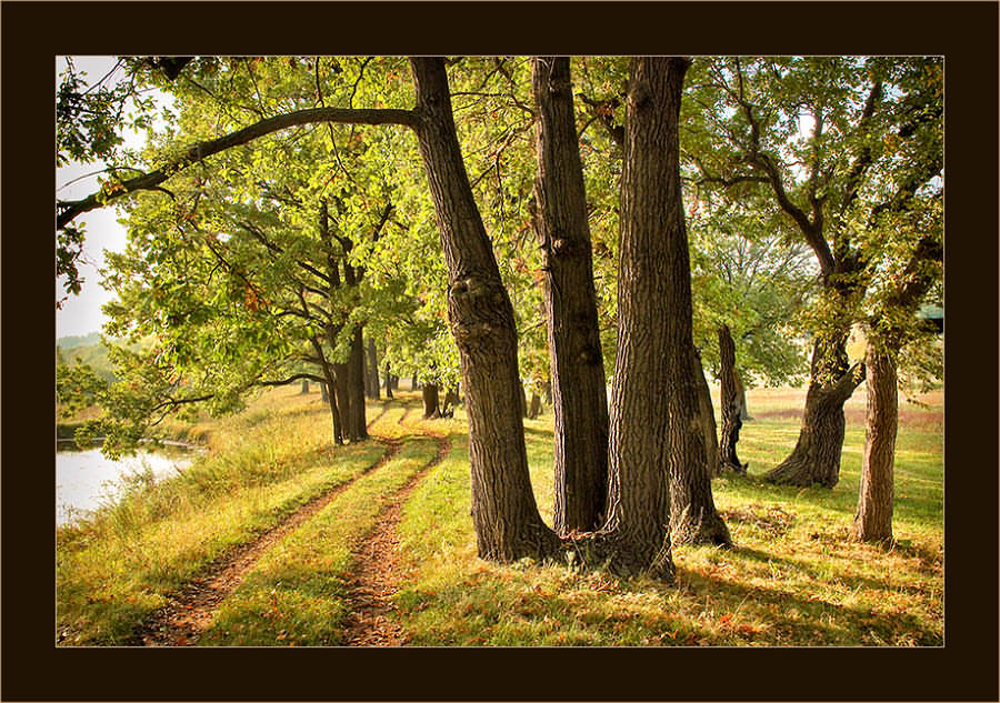 "photo ""Returning in September"" tags: landscape, autumn, forest"