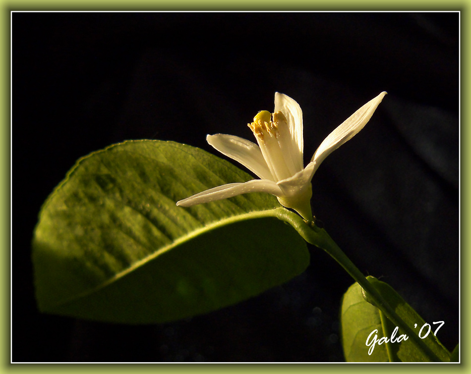 "photo ""Lonely flower"" tags: macro and close-up, nature, flowers"